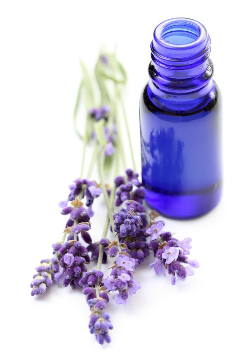 hinh-tinh-dau-oai-huong-nguyen-chat-(lavender-essential-oil)